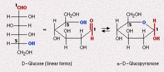Carbono Anomérico