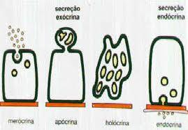 Formas de Secreção