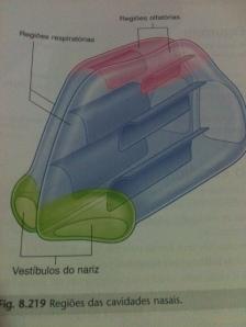 Regiões da Cavidade Nasal