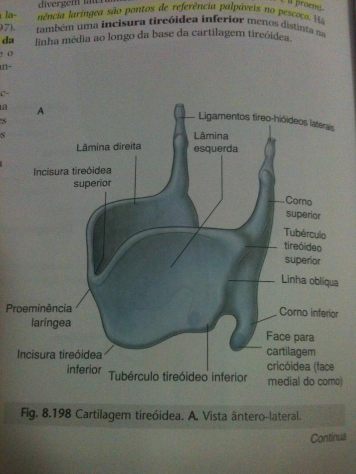 Cartilagem Tireoidea