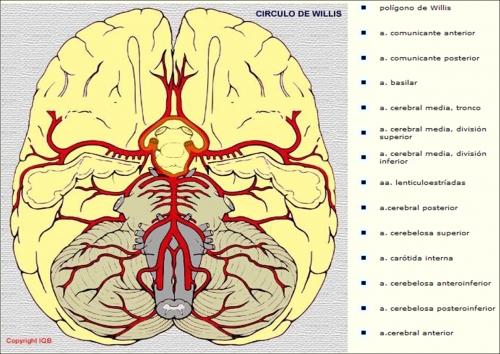 Irrigação do Cérebro